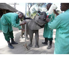 Elephant Orphanage and Community Outreach - Zambia - Volunteer