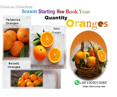 season of Oranges start